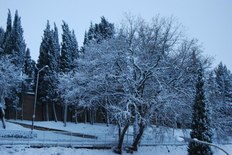 Neve ad Acquaviva Picena, 5 febbraio (Erika Corradetti)