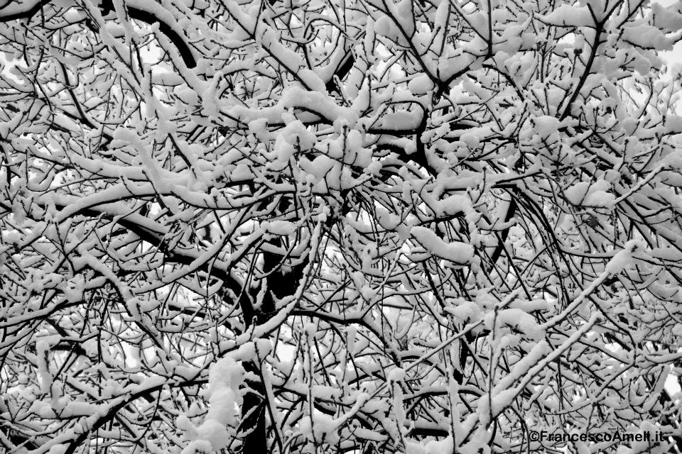 Neve ad Ascoli 3 febbraio 2012 (ameli)