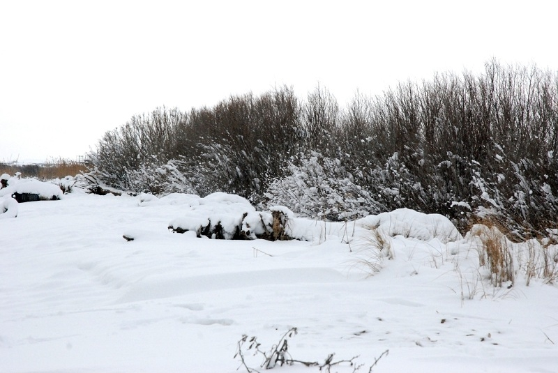 Neve alla Sentina 7 febbraio 2012 foto di Sonia Marinucci 3