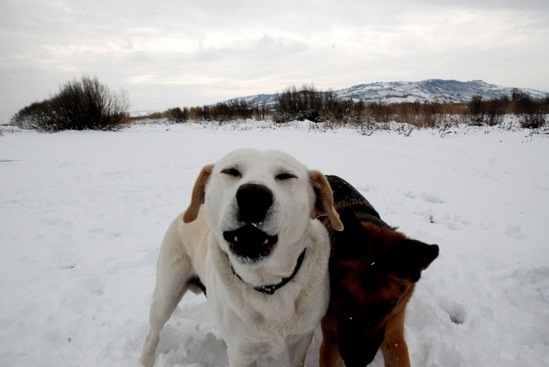 Neve alla Sentina 7 febbraio 2012 foto di Sonia Marinucci 4