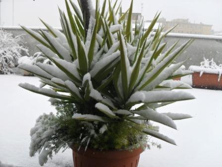 Neve domestica , 3 febbraio (Maria Paola Salzano, San Benedetto) 1
