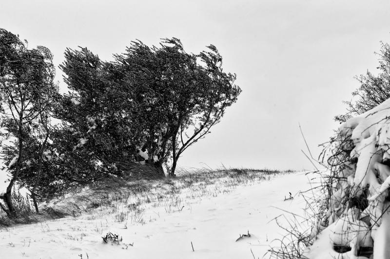 Neve, foto artistica di Andrea Tomassini 1