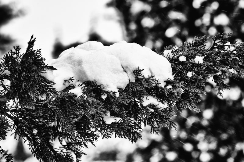 Neve, foto artistica di Andrea Tomassini 2