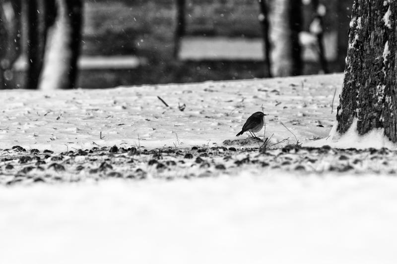 Neve, foto artistica di Andrea Tomassini 3