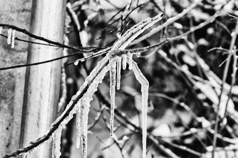 Neve, foto artistica di Andrea Tomassini 4