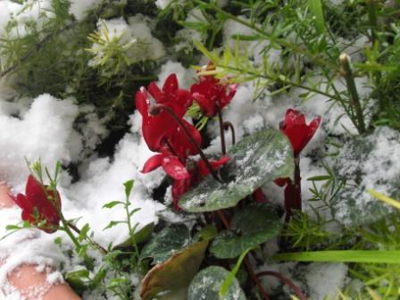 Neve sui balconi, 3 febbraio San Benedetto (prego indicare nome autore)