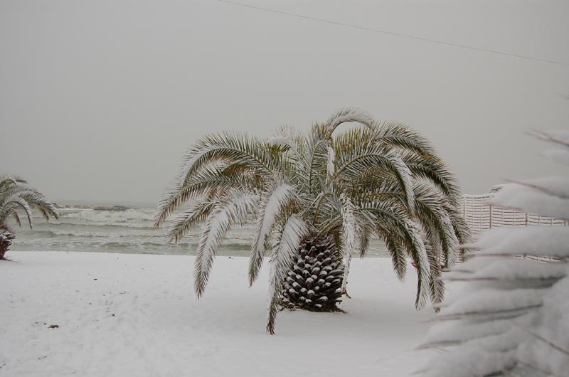 Palme e neve, 4 febbraio Gino Arzani
