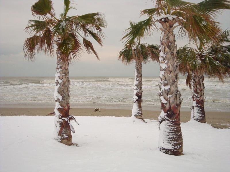 Palme e neve, 4 febbraio, Grottammare (giacomo lauretti9