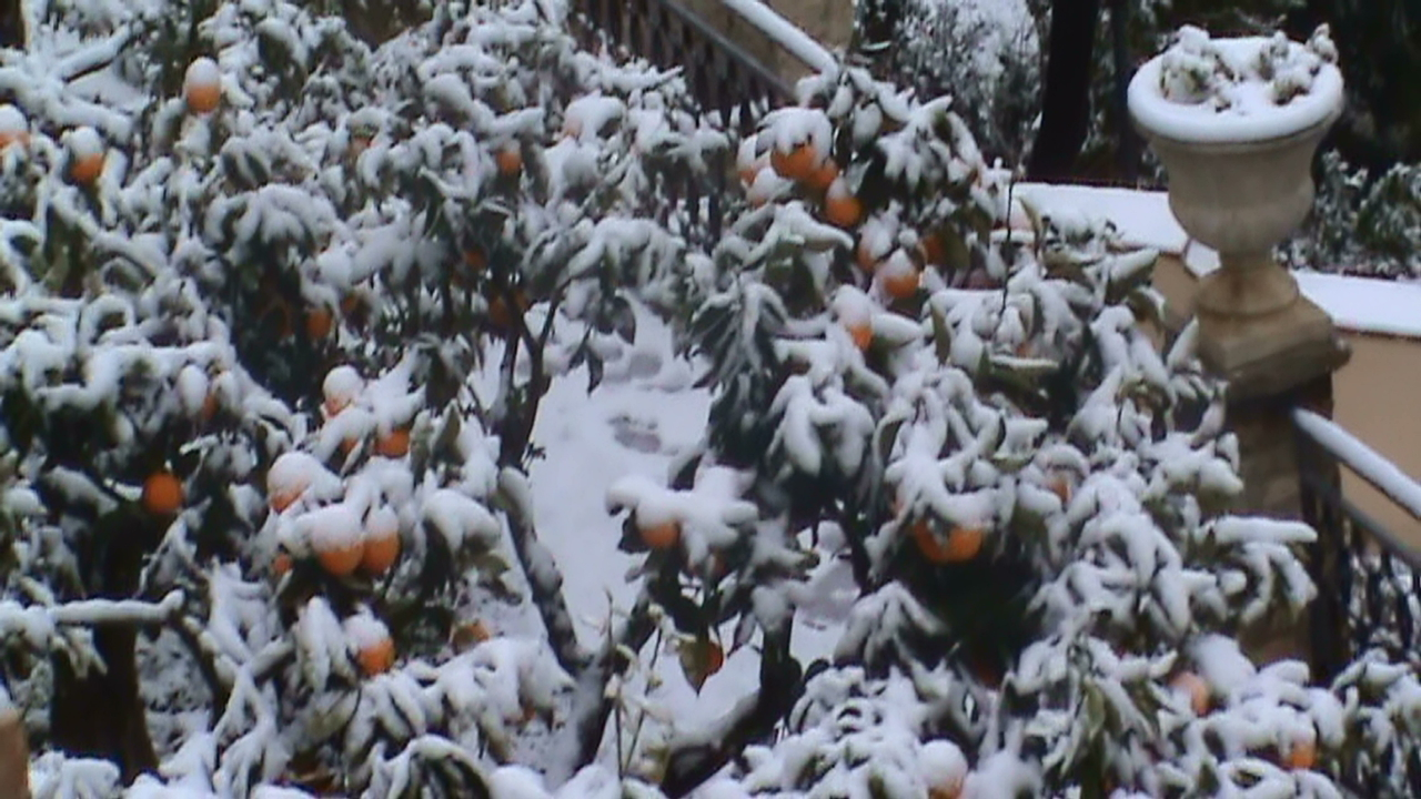 Particolare degli aranci innevati del paese alto di Grottammare. Foto neve di Nicolas Abbrescia