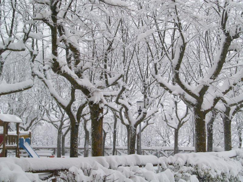 Ripatransone, neve del 5 febbraio 2012, Lorenzo Guidi 2
