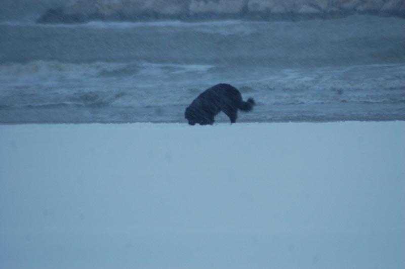 Roberto Bartolomei, neve su San Benedetto 3 febbraio cane in spiaggia
