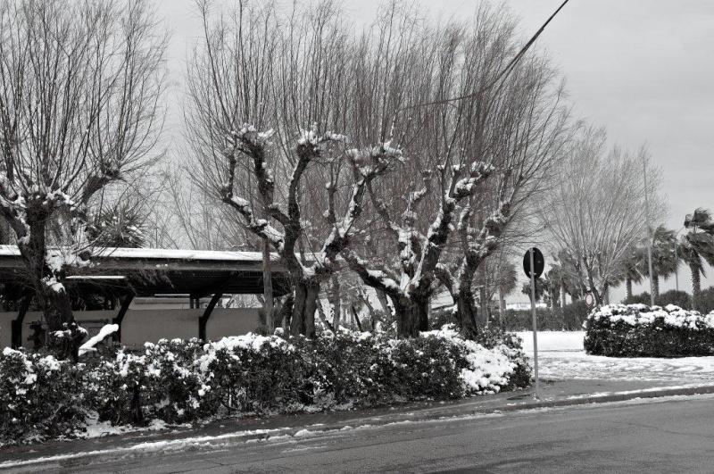 Neve a San Benedetto, 4 febbraio (Renato Speziali)