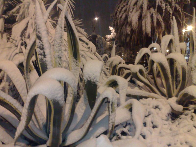 San Benedetto, neve del 3 febbraio, foto di Emanuela Maranesi 2