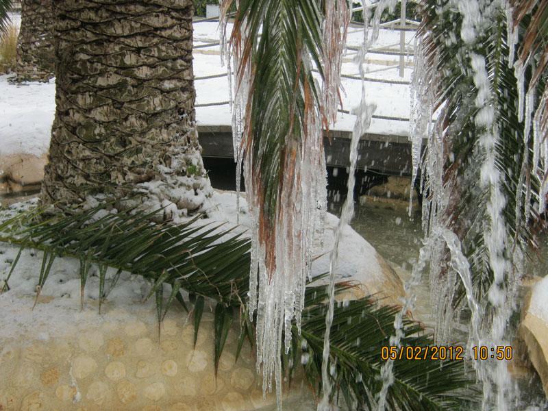 San Benedetto, neve febbraio 2012, 5-febbraio, una palma ghiacciata