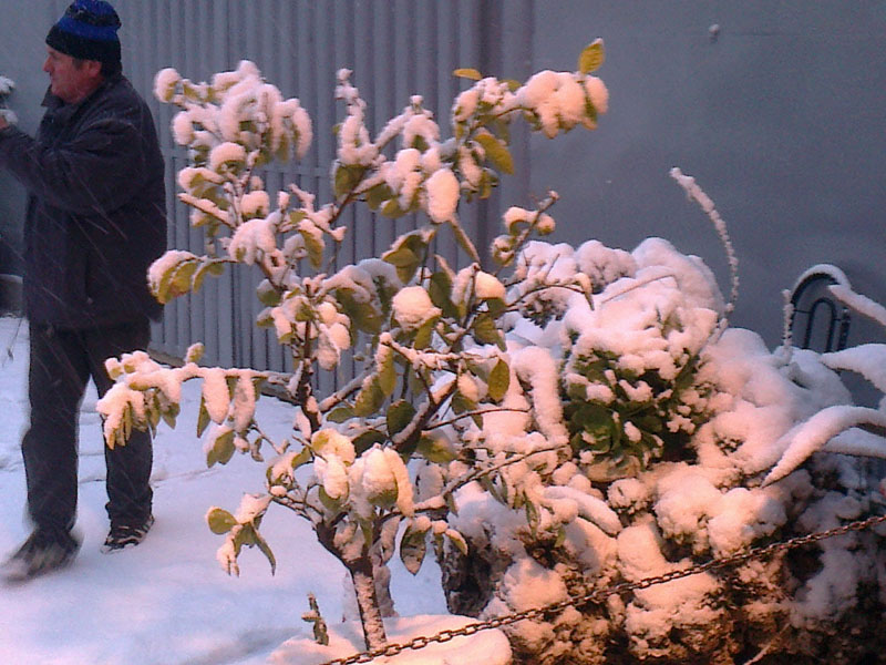 San Benedetto, neve febbraio 2012,marinai, piante e neve