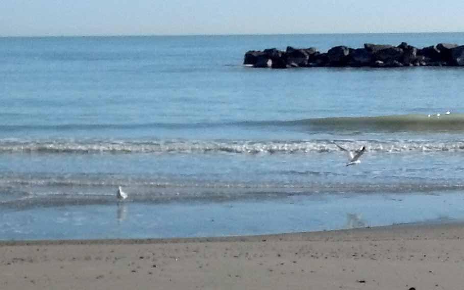 Spiaggia di San Benedetto, 28 febbraio 2012, gabbiani