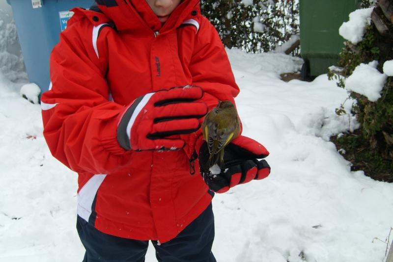 Uccellino salvato, 4 febbraio, neve a San Benedetto, Giuliano Lucidi 1