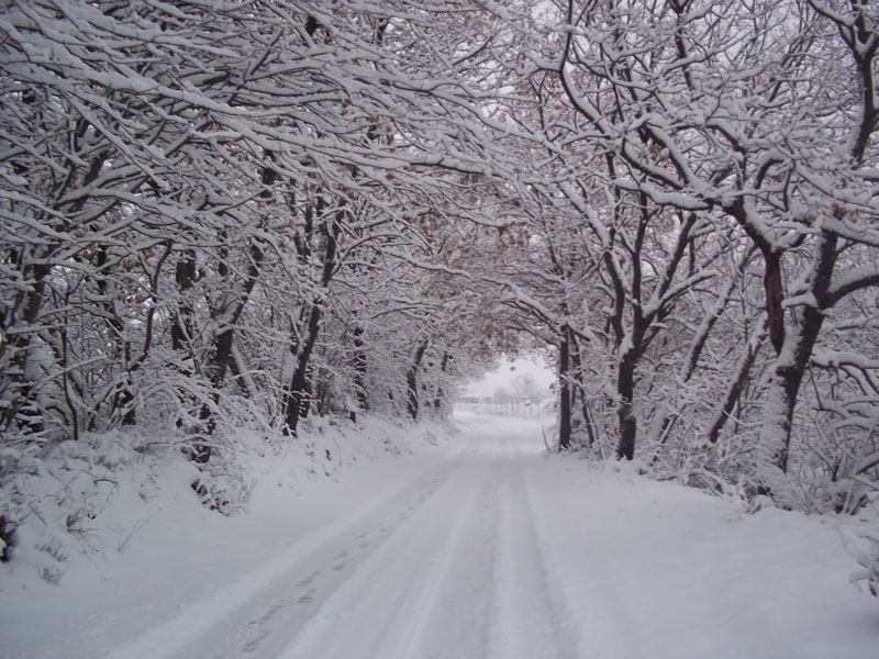 Neve a Campli 3 febbraio 2012 (Piera L)