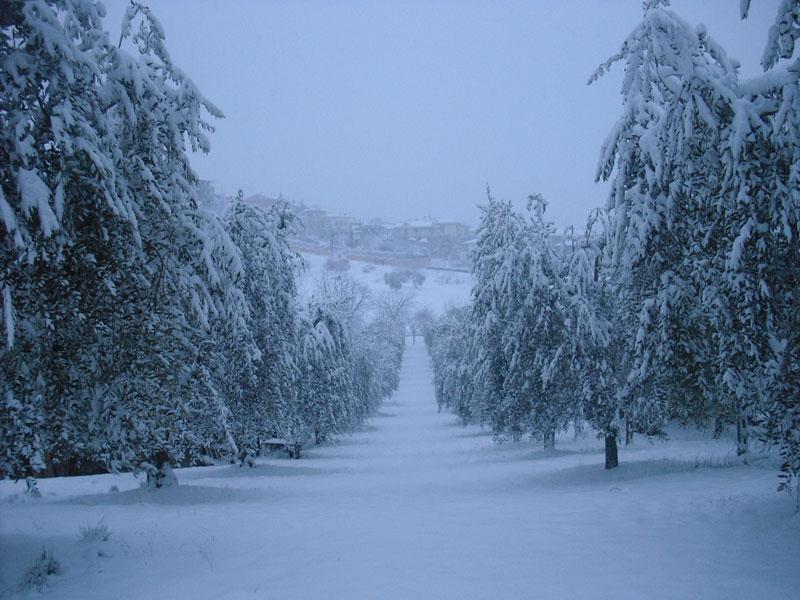 Neve a Centobuchi 4 febbraio 2012 (Gianluca Sarghini)
