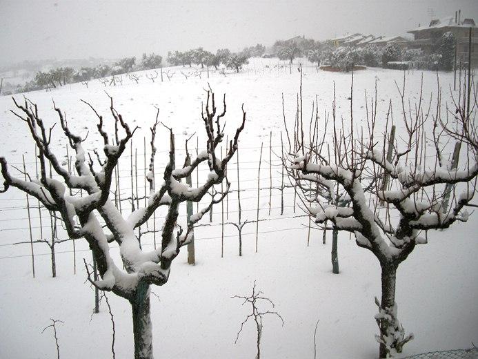 neve sulle colline di cupra marittima (2)