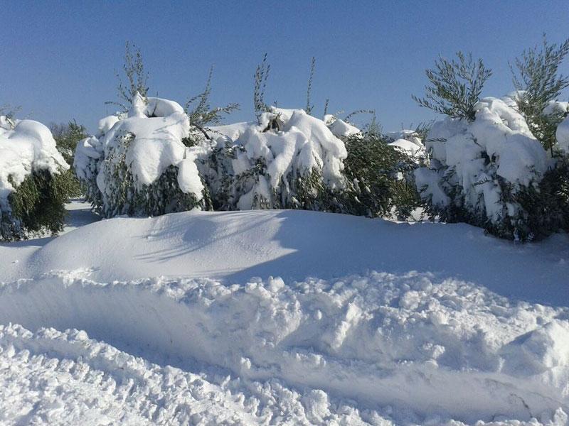 Neve a Controguerra (foto Simone Roncacè)