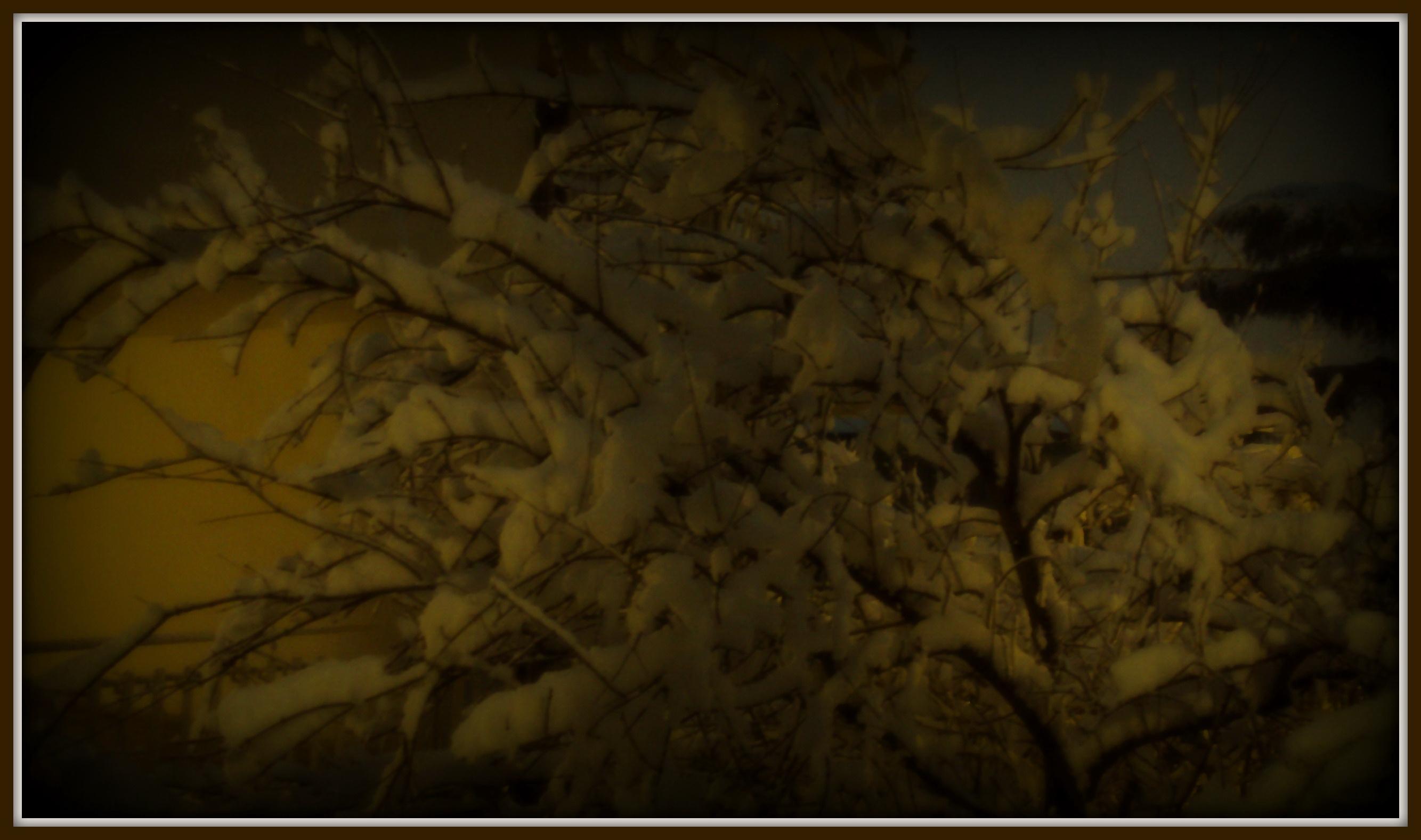 Neve a San Benedetto 3 febbraio 2012 - quartiere Santa Lucia