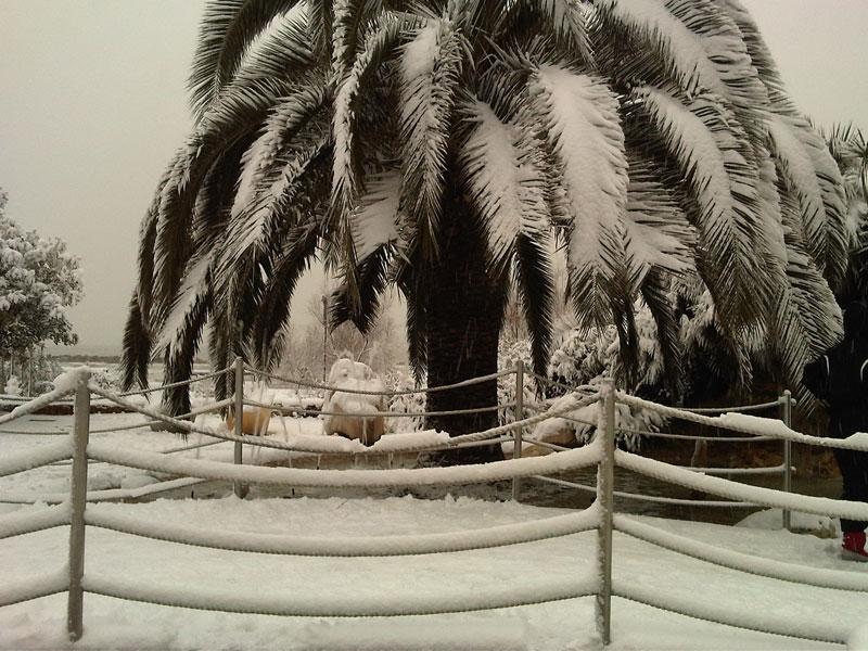 Neve a San Benedetto del Tronto