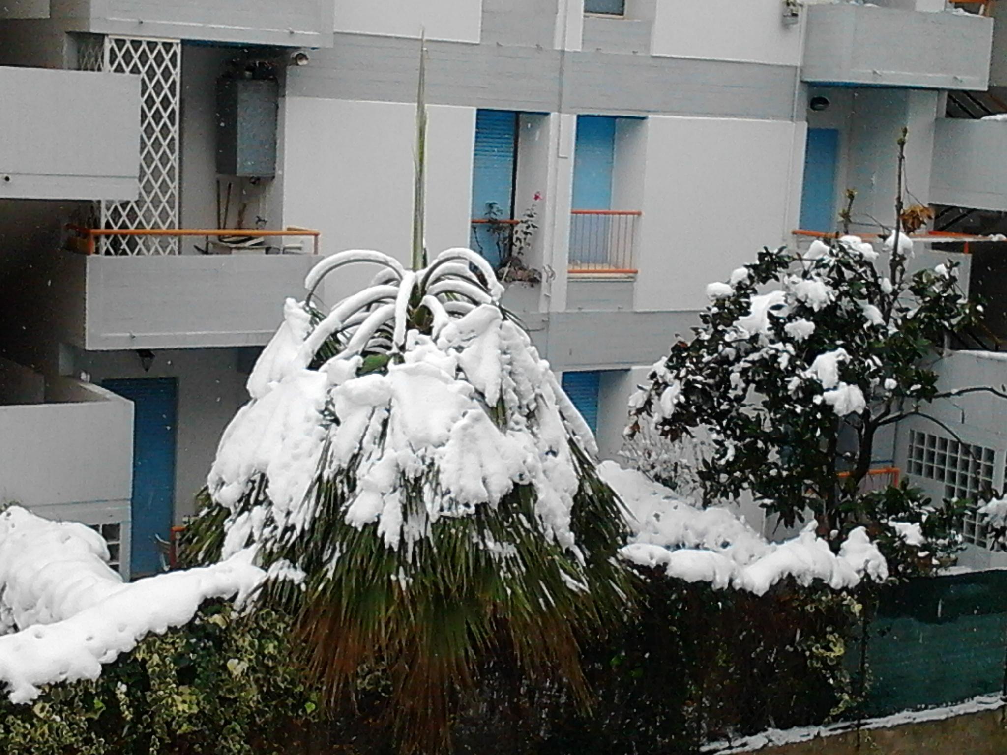 Una palma a pda, foto neve del 5 febbraio, di Lucio Cianci