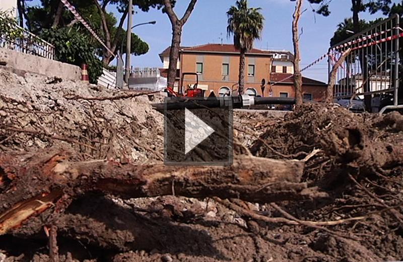 Taglio di pini in via della Stazione, il video