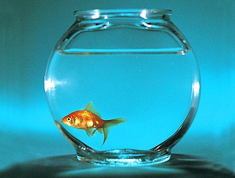 Viviamo come dei pesciolini rossi, felici nelle nostre ampolle