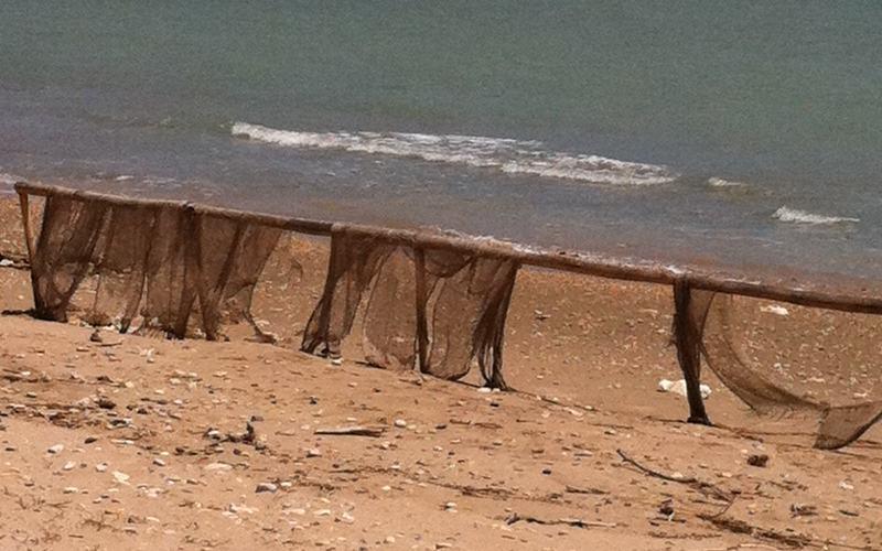 La duna litoranea dopo cinque mesi