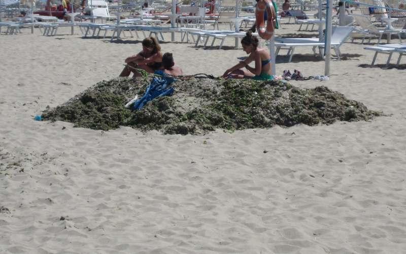 Alghe a San Benedetto (2)