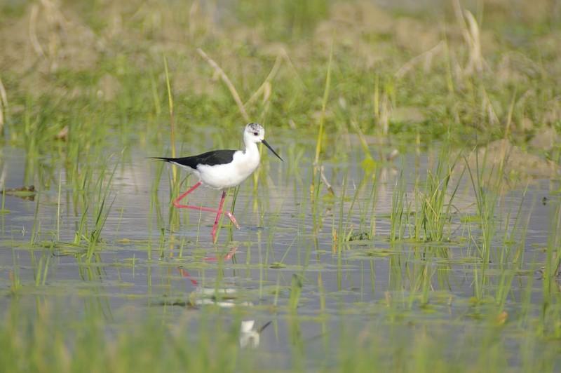 Un'immagine della fauna della Riserva Naturale Sentina