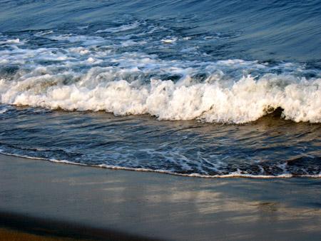 Pulce di mare nelle acque sambenedettesi
