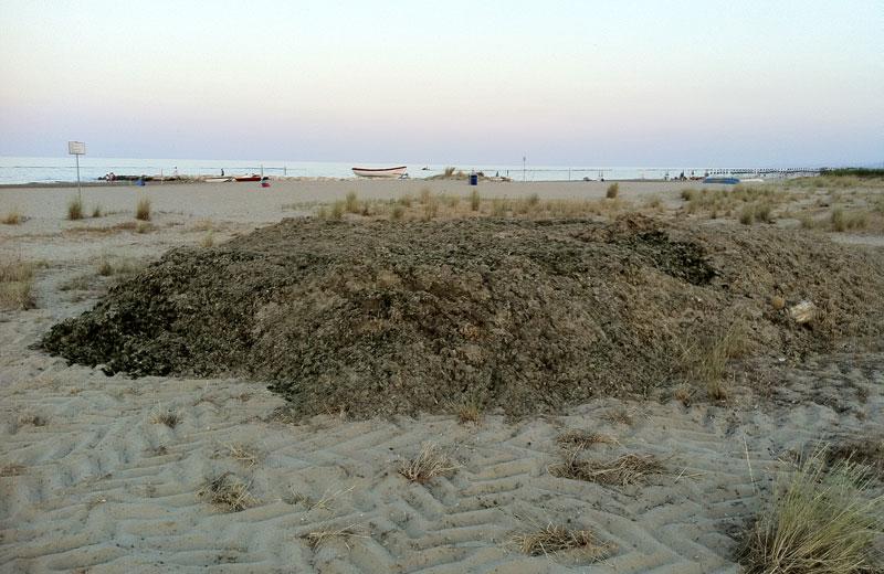 Cumuli di alghe stoccati sul tratto di spiaggia libero tra lo chalet Nemo e il MIami Beach
