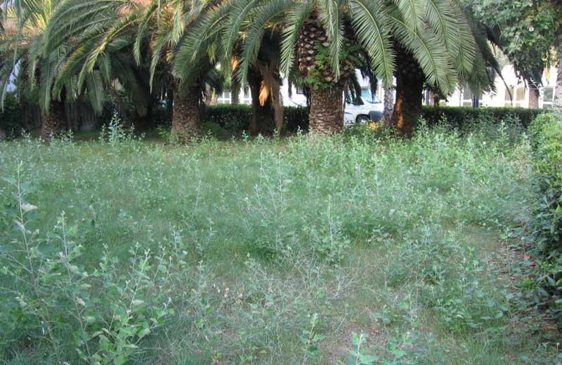 Vegetazione incolta a Martinsicuro