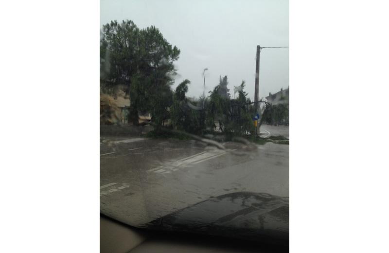 Tortoreto 14 settembre 2012, albero caduto in via Muracche