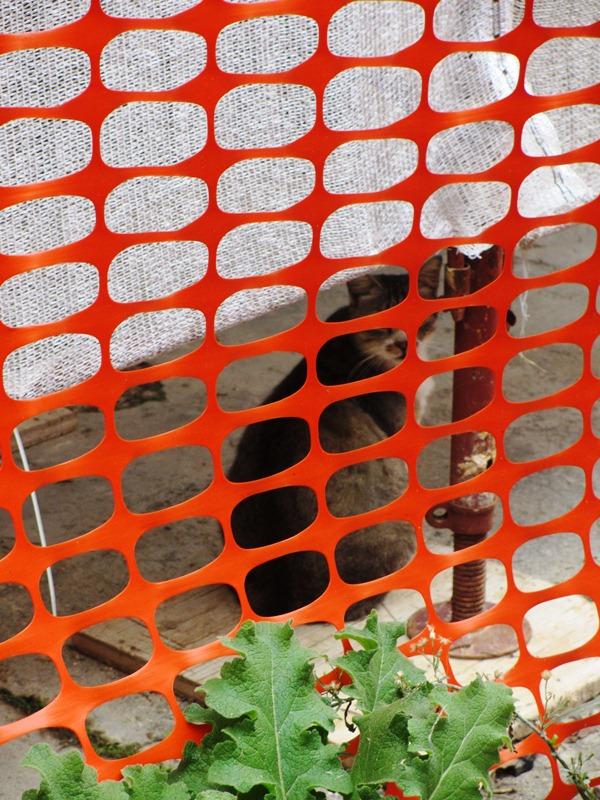 Alcuni gatti della colonia all'esterno  (1)