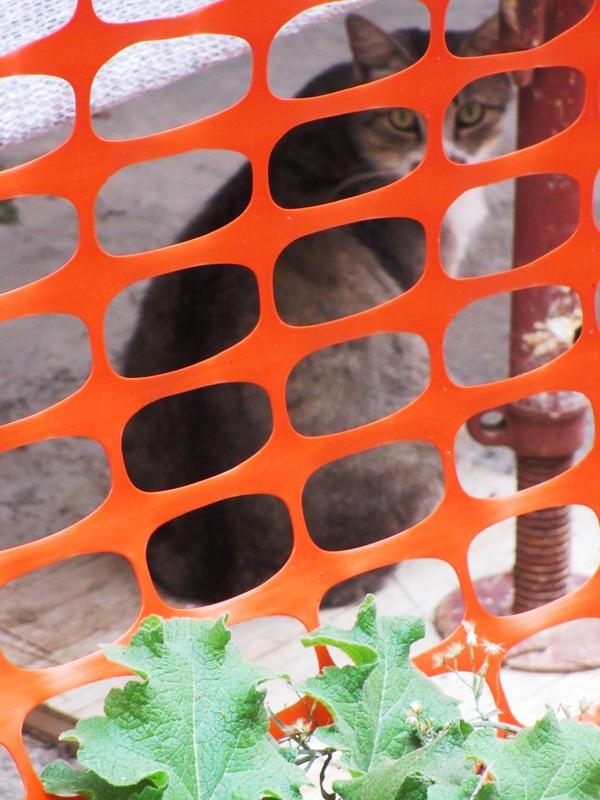 Alcuni gatti della colonia all'esterno  (2)