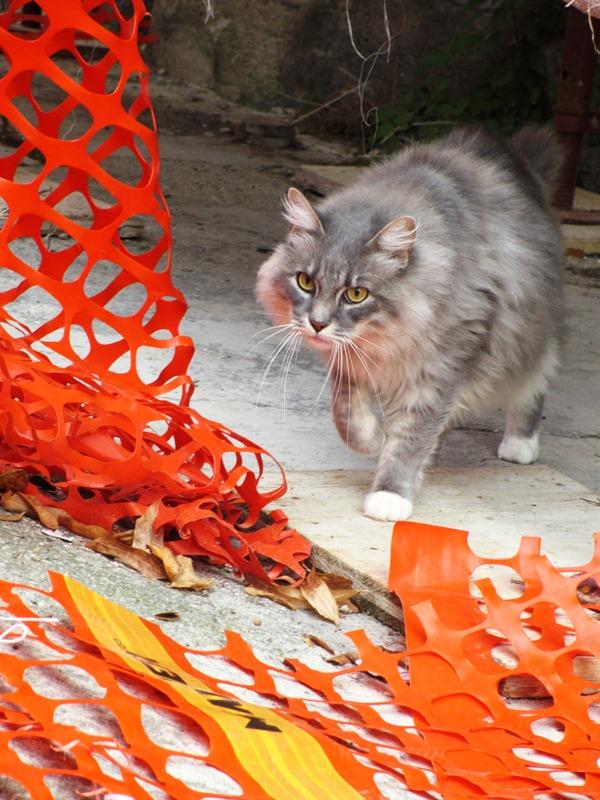 Alcuni gatti della colonia all'esterno  (3)