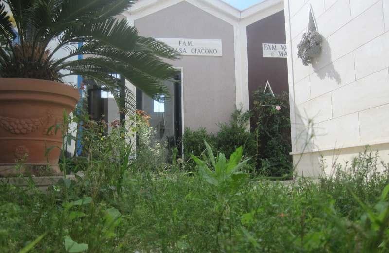 Cimitero di Grottammare. Erbacce alte