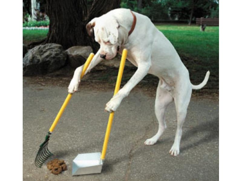 A Grottammare strade più pulite e cani più contenti