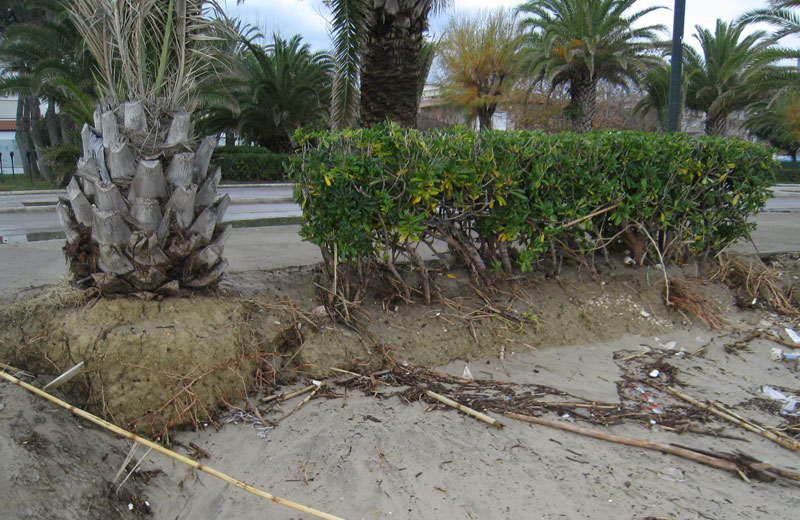 Villa Rosa 29 novembre 2012