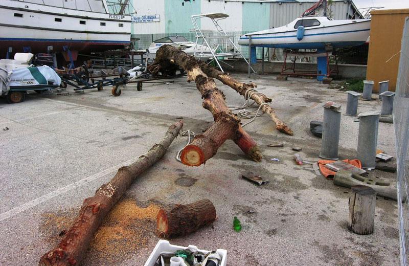 Il tronco recuperato al largo di Giulianova