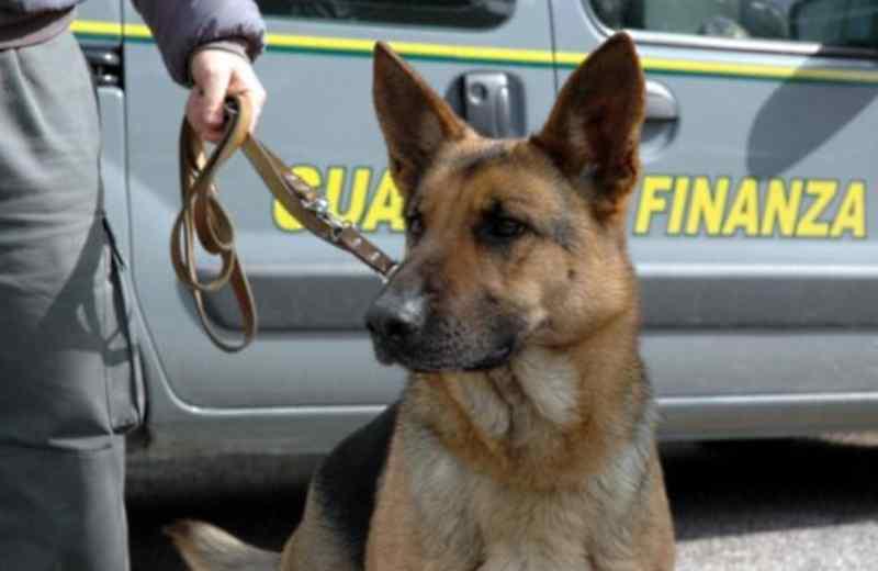 Cani-antidroga (fonte Google)