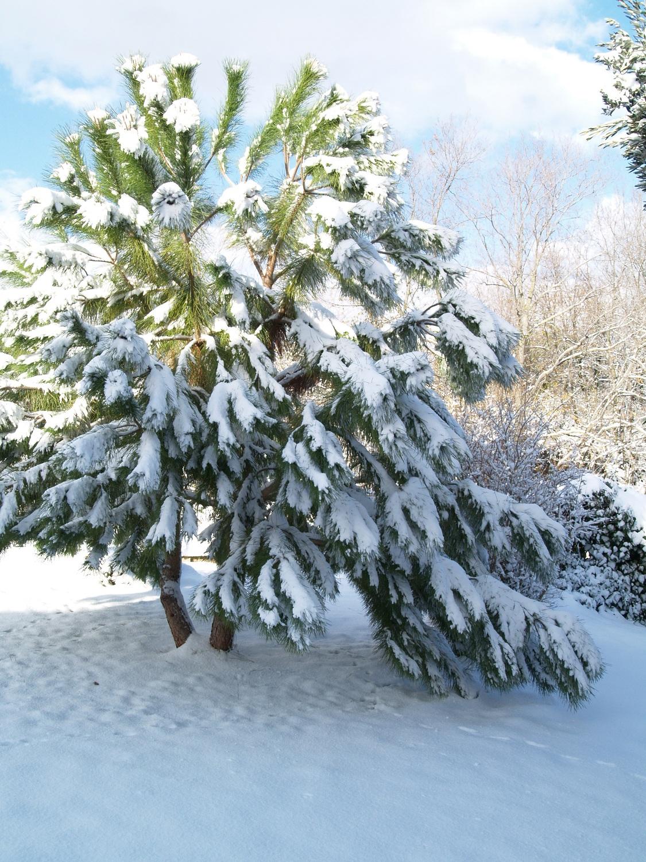 Neve a Ripatransone, foto Annalisa Agostini, 9 dicembre 2012 5