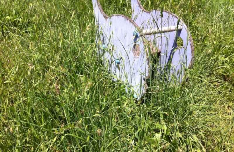 Erba alta in un parco pubblico della Valtesino (4)