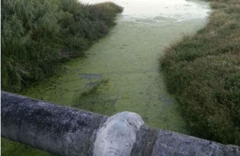 Fiume Tesino con alghe