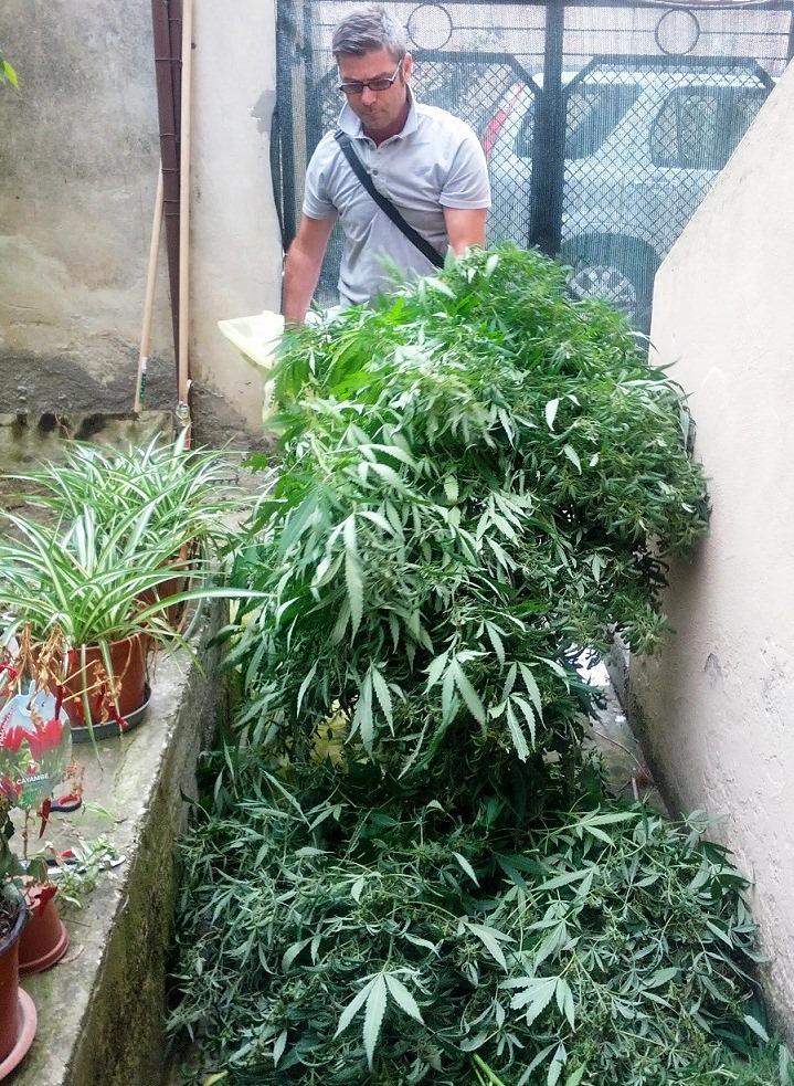 La Guardia di Finanza sequestra piante di marijuana a San Benedetto