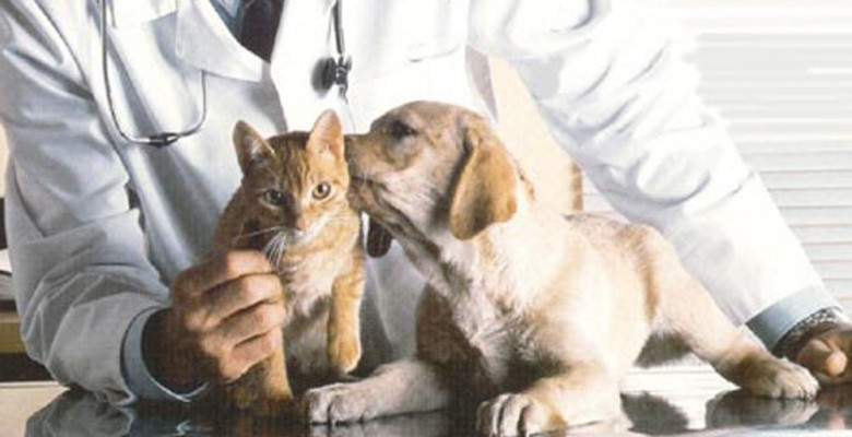 Parafarmacia veterinaria